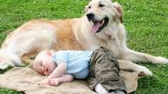 Домашні тварини для малюків - заходи безпеки!