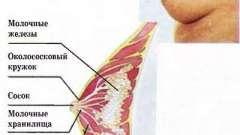 Фізіологія грудного вигодовування