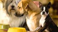 Як годувати собаку