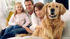 Як вибрати сімейну собаку?