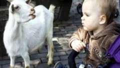 Козяче молоко дітям