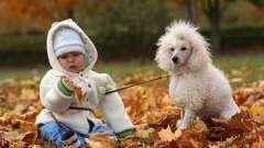 Кращий собака для дитини